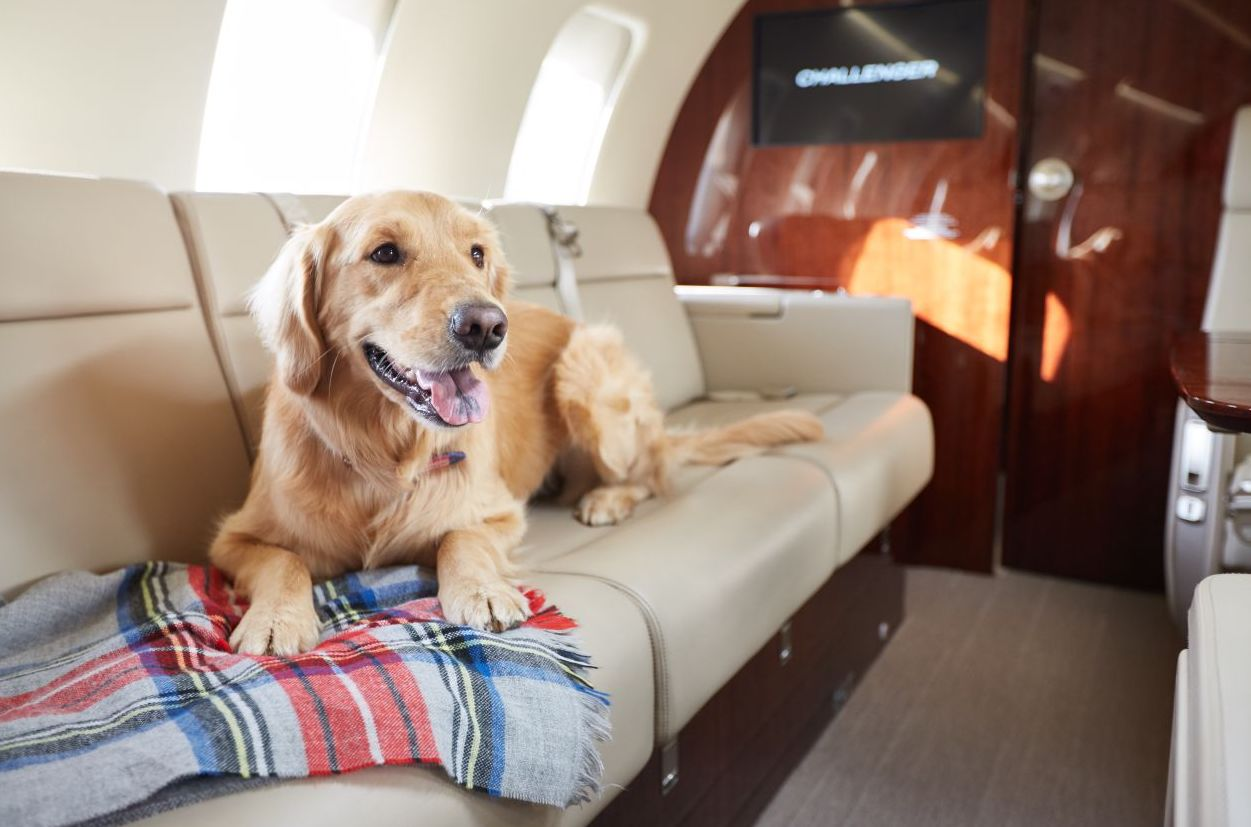 fly  with dogs on the flights to caribbean